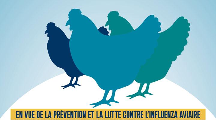 Déclarez vos élevages de volailles